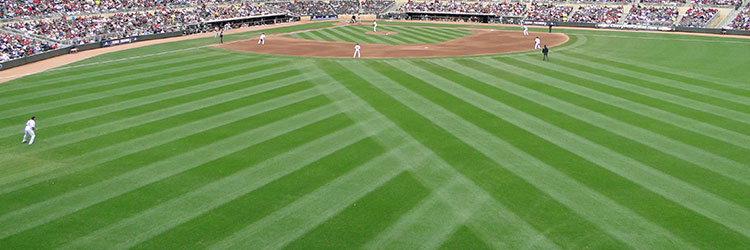 Major league baseball ballpark grass and turf grass at target field malvernweather